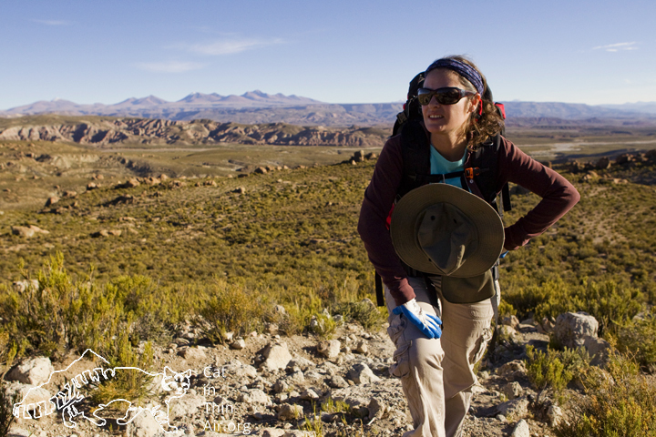 Andean Cat biologist Cintia Tellaeche taking a breather. At over 13,000 feet every step is hard work.