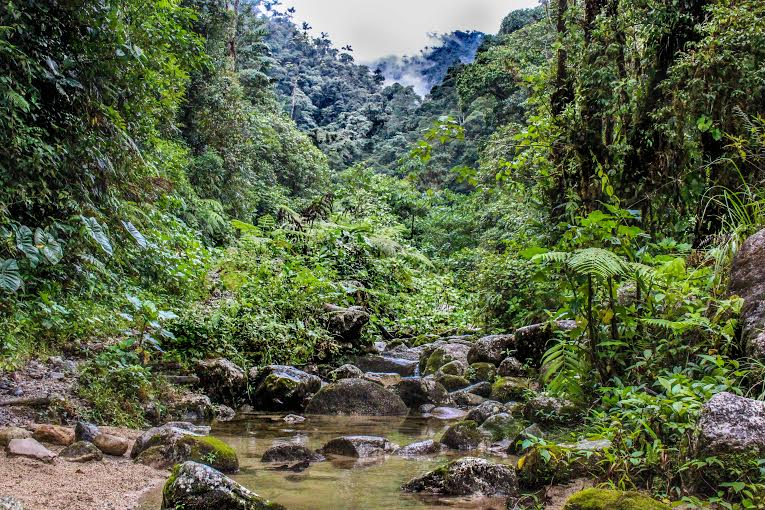 The cloud forest near Mera, Ecuador in January 2016 (Photo: Justin Taus).