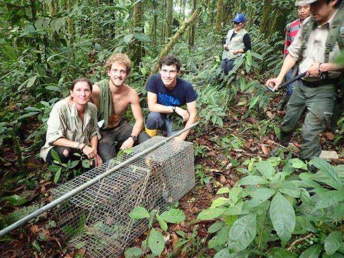 Jeni Taylor (from left), Thomas Ottenhoff, Jason Howard, and members of the Ecuador Ministry of Environment moments before the ocelots' release (photo supplied by Thomas Ottenhoff).